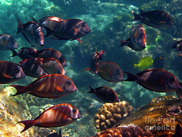 Photograph - Reef School by Bette Phelan