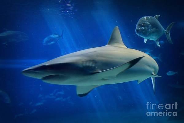 Hawaiian Fish Photograph - Reef Shark by DJ Florek
