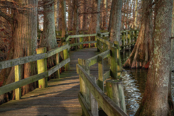 Photograph - Reelfoot Lake 001 by Lance Vaughn