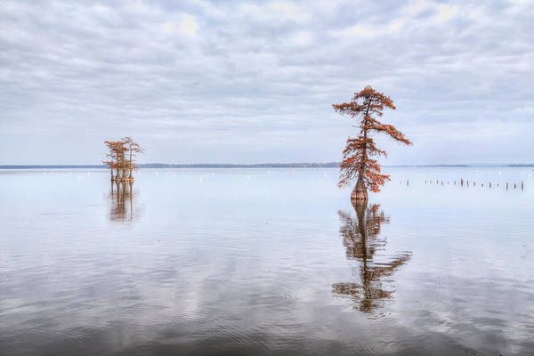 Photograph - Reelfoot Lake 60 by Jim Dollar