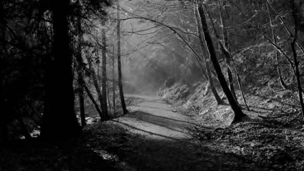 Reelig Forest Walk Art Print