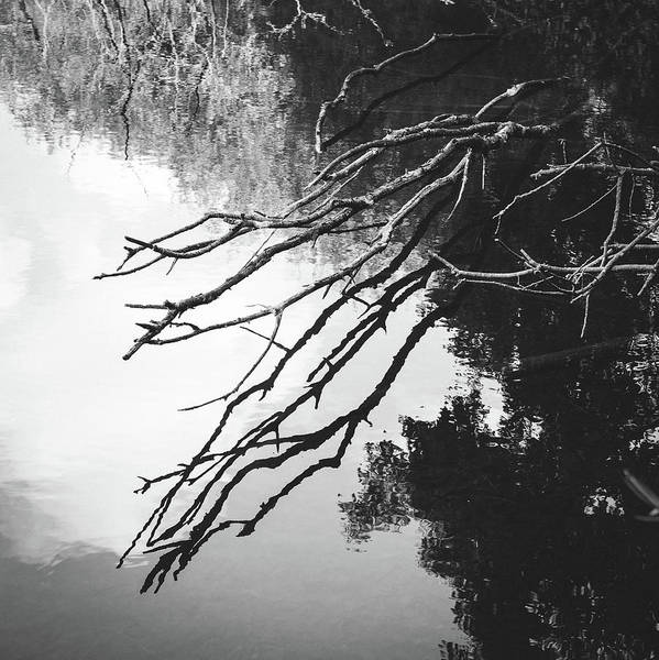 Coverts Photograph - Reflected Branches by Chris Dale