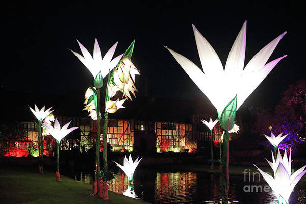 Photograph - Reflected Glowing Flowers Wisley by Julia Gavin