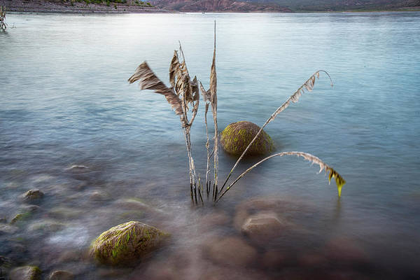 Photograph - Reflected Rocks And Moss In Roosevelt Lake by Dave Dilli