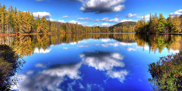 Photograph - Reflected Tamaracks by David Patterson