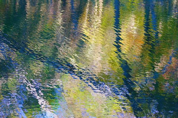 Photograph - Reflected Trees by Polly Castor