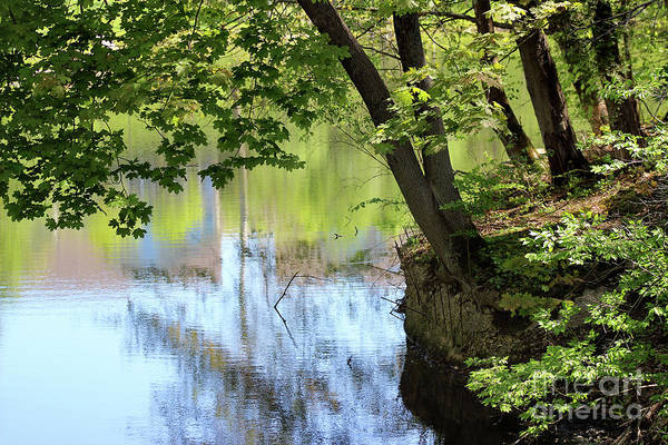 Photograph - Reflecting On Spring by Karen Adams