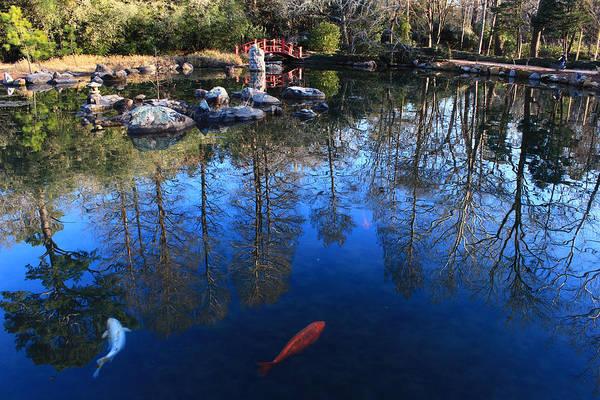 Wall Art - Photograph - Reflecting Pool by Kevin Wheeler