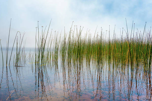 Photograph - Reflecting Tulies And Fog At Marie Lake by Dee Browning