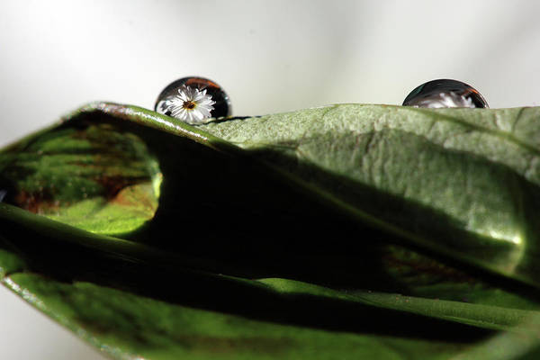 Photograph - Reflecting Water Drop On Leaf by Angela Murdock