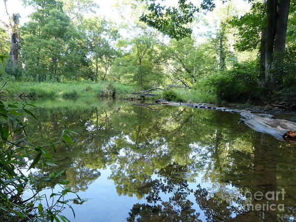 Photograph - Reflection Along Beetree Run by Donald C Morgan
