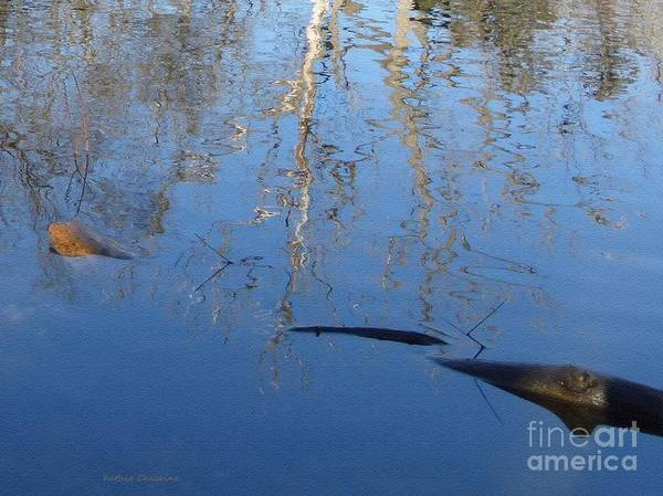 Photograph - Reflection by Kathie Chicoine