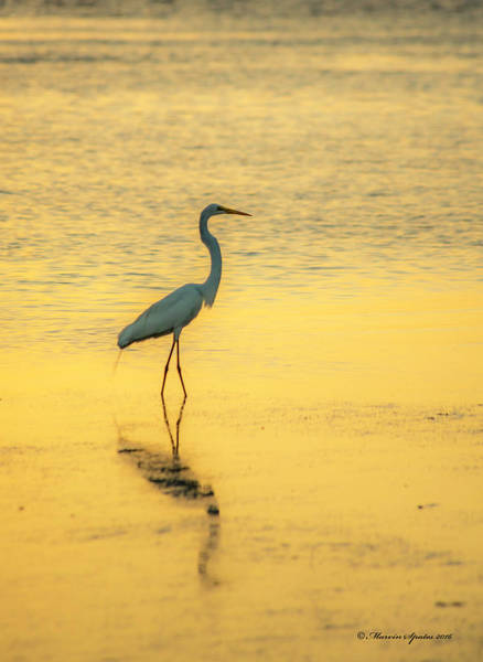 Shorebird Photograph - Reflection by Marvin Spates