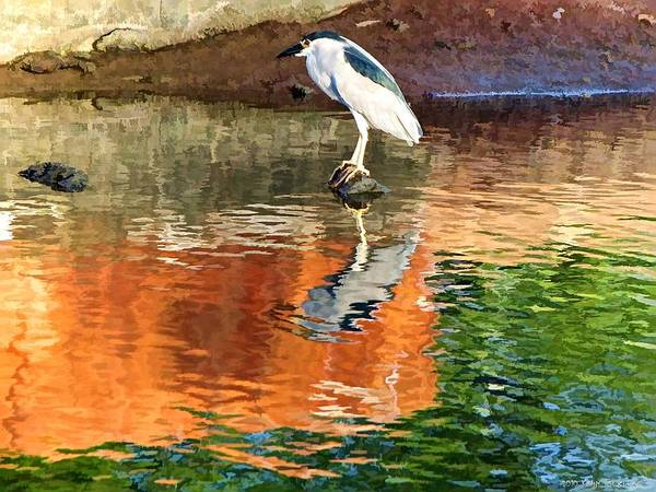 Photograph - Reflection Of A Bird by Kathy Tarochione