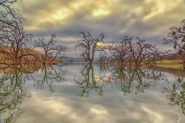 Photograph - Reflection Of Clouds And Trees by Marc Crumpler