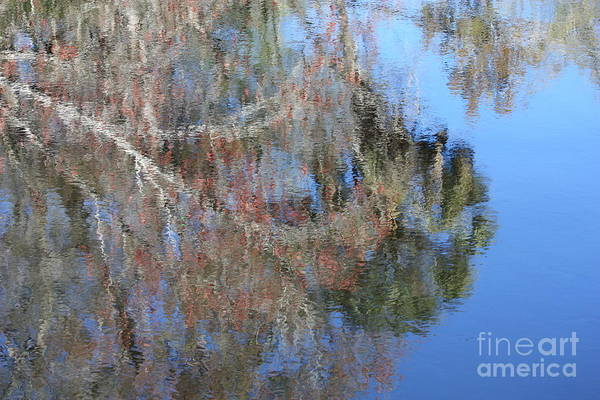 Photograph - Reflection Of Florida Tree by Carol Groenen