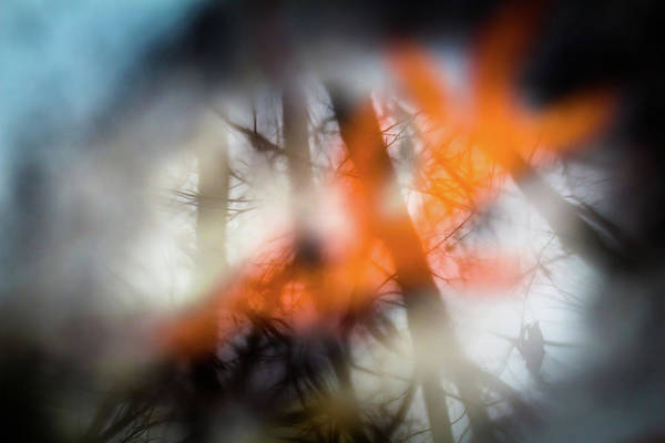 Photograph - Reflection Of Trees Over An Oak Leaf Encased In Water And Ice by Jeanette Fellows