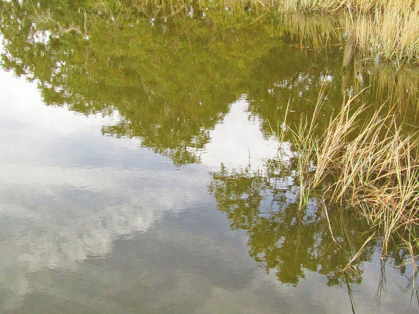Photograph - Reflection by Robert Knight