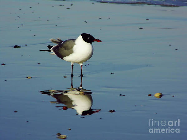 Photograph - Reflection - Sea - Gull by D Hackett