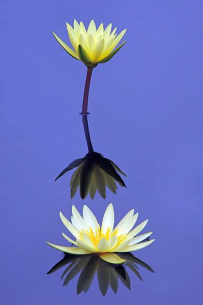 Photograph - Reflections 2 by Byron Varvarigos