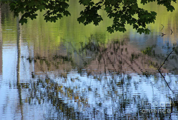 Photograph - Reflections 2016 by Karen Adams