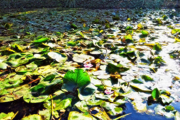 Photograph - Reflections Across The Lily Pond by Glenn McCarthy Art and Photography