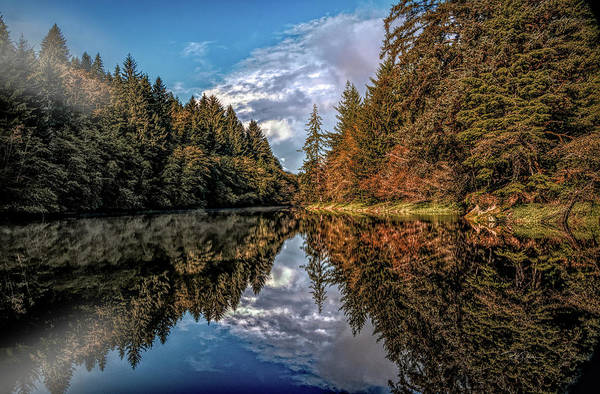 Photograph - Reflections After The Rain by Bill Posner