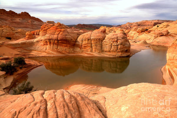 Photograph - Reflections At Coyote Buttes by Adam Jewell
