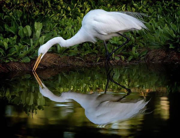 Photograph - Reflections by Bruce Bonnett