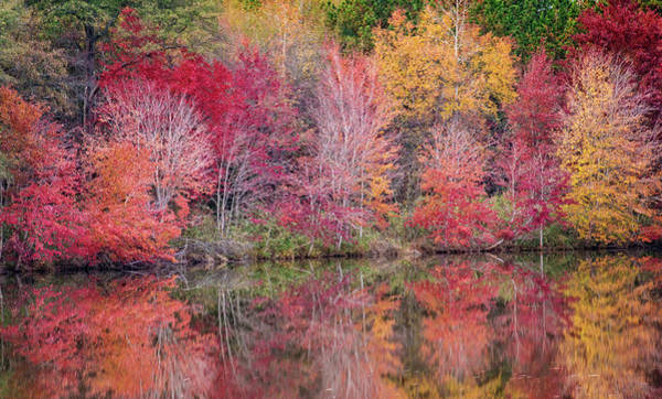 Photograph - Reflections by David Waldrop