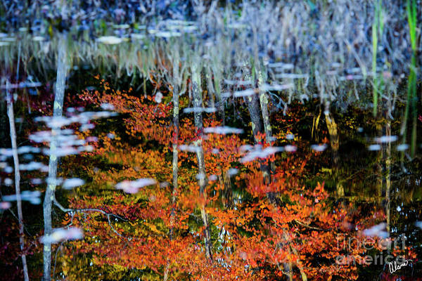 Photograph - Reflections In A Bog by Alana Ranney