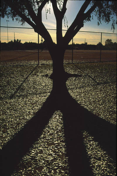 Photograph - Reflections In A Park by Randy Oberg