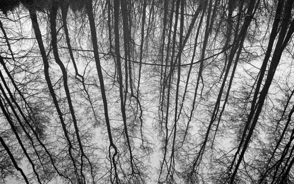 Wall Art - Photograph - Reflections In Cromford Canal by Phil Searle