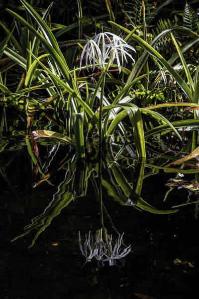 Photograph - Reflections In The Dark Water by Debra and Dave Vanderlaan