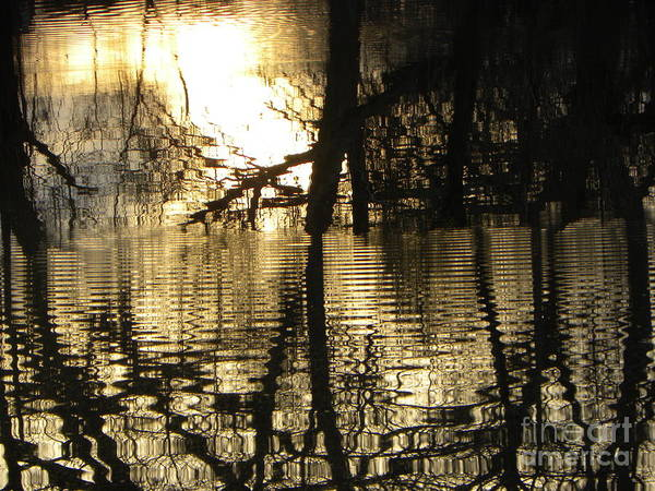 Photograph - Reflections In The Pond by Belinda Sellari