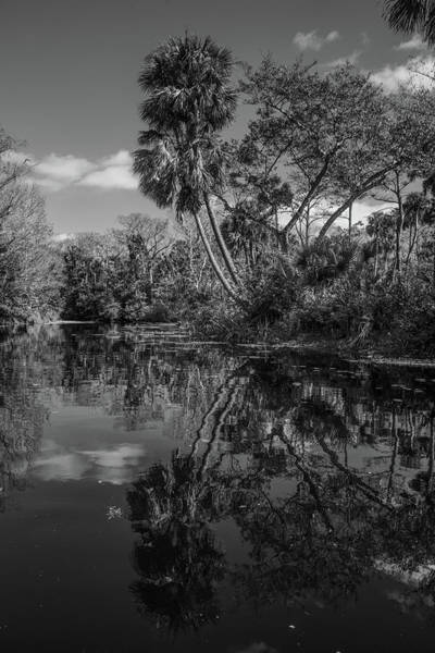 Photograph - Reflections In The Tropics by Debra and Dave Vanderlaan