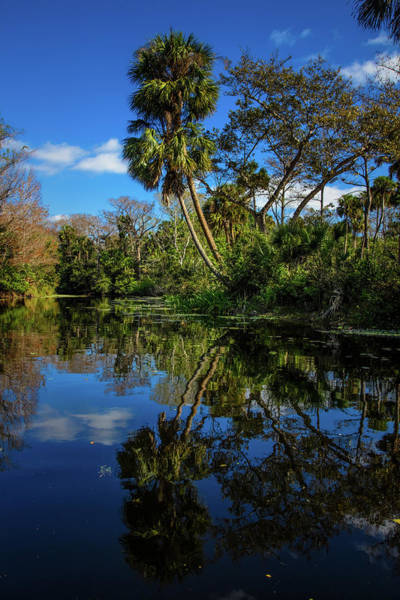Photograph - Reflections In The Tropics In Vivid Colors by Debra and Dave Vanderlaan