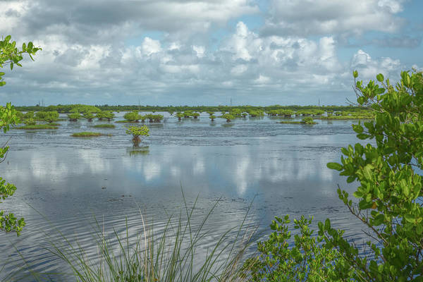 Photograph - Reflections In The Wetlands by John M Bailey
