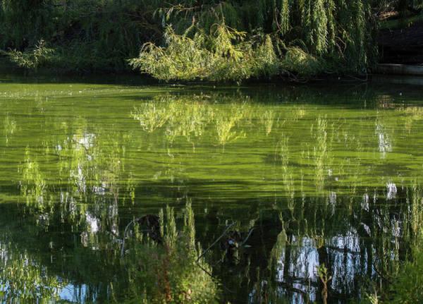 Photograph - Reflections by Judi Dressler