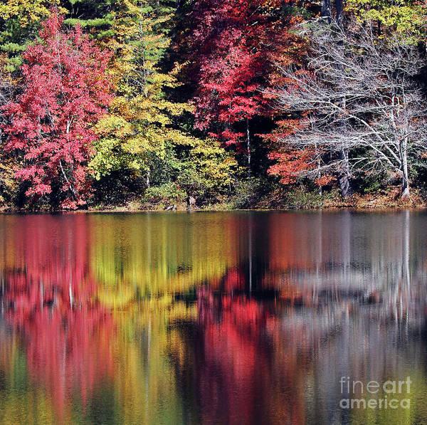 Photograph - Reflections Of A Bare Grey Tree by Jennifer Robin
