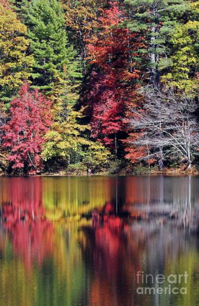 Photograph - Reflections Of A Bare Tree by Jennifer Robin