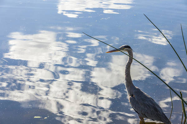 Photograph - Reflections Of A Bird by Jon Glaser