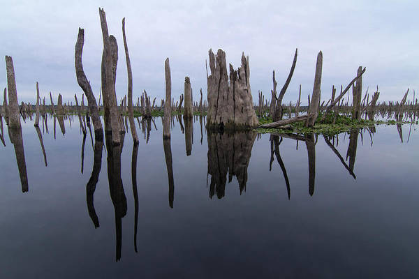 Photograph - Reflections Of A Drowned Forest by Paul Rebmann