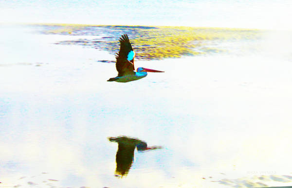 Photograph - Reflections Of A Pelican by Susan Vineyard