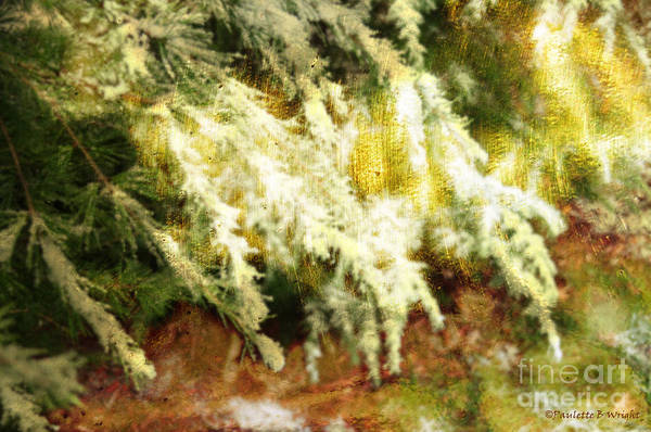 Photograph - Reflections Of A Snow by Paulette B Wright