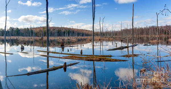 Photograph - Reflections Of A Swamp by Rod Best