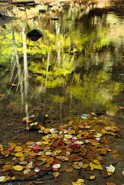 Photograph - Reflections Of Autumn by Larry Ricker