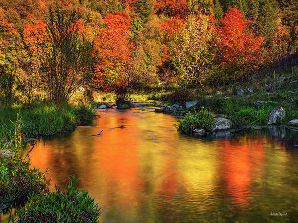 Photograph - Reflections Of Autumn by Leland D Howard