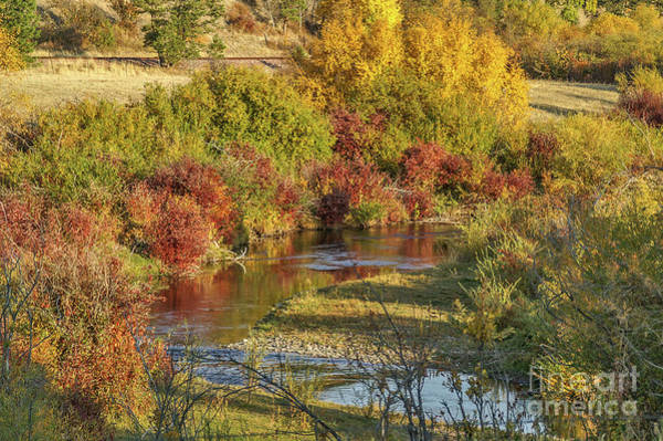 Photograph - Reflections Of Autumn by Sue Smith