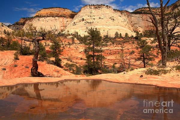 Photograph - Reflections Of Navajo Sandstone by Adam Jewell